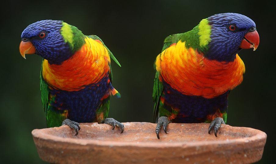australiavsamerica